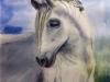 cheval_pierrette_2018